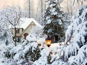Postal: La magia de la naturaleza en pleno invierno