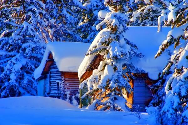 Cabaña y pinos cubiertos de nieve