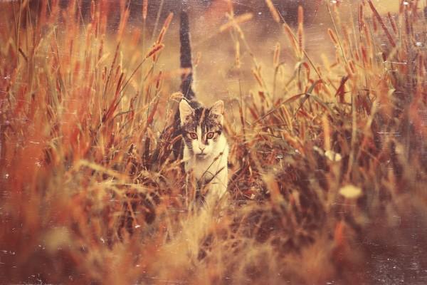 Gato caminando en el campo