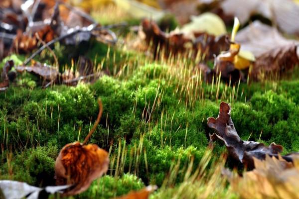 Hojas otoñales en la hierba