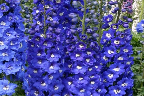 Bellas flores color violeta en un jardín