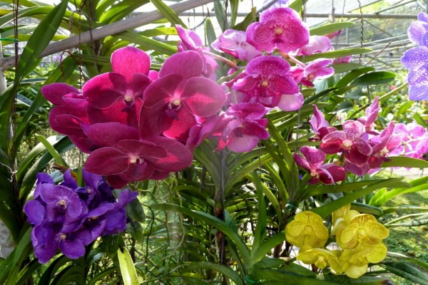 Espléndidas orquídeas de varios colores en un jardín