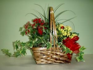 Bonitas plantas en una cesta de mimbre