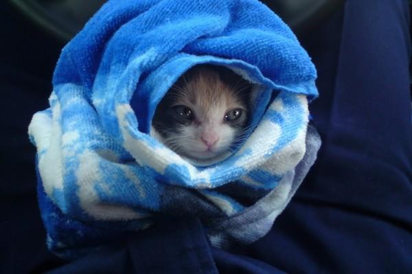 Gato envuelto en una toalla