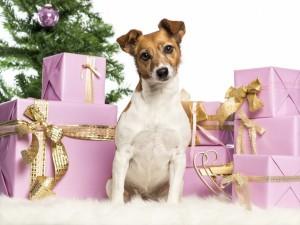 Perrito cuidando los regalos de navidad