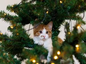 Un simpático gatito entre las ramas de un árbol de Navidad
