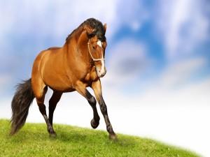 Un hermoso caballo marrón