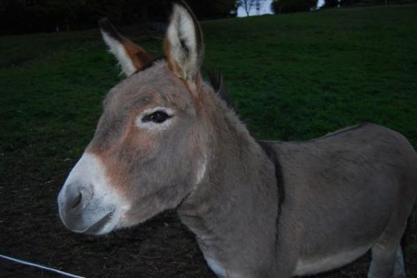 Un bonito burro
