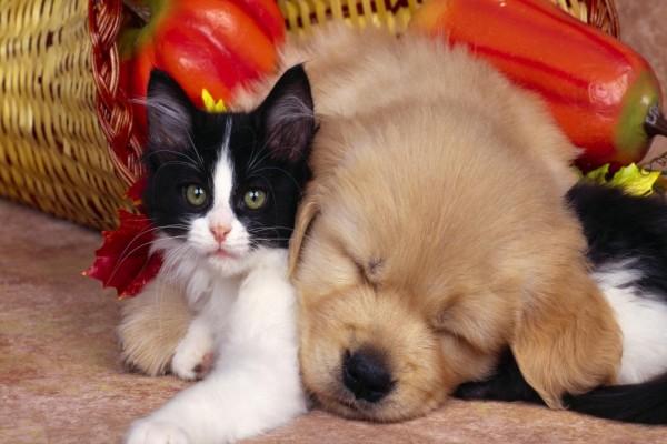 Perro dormido sobre un gato
