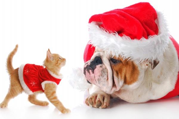 Gato y perro vestidos para festejar la Navidad
