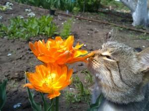 Gato oliendo una flor naranja