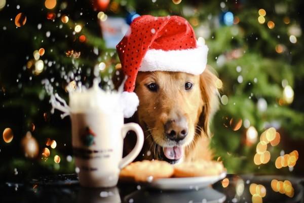 Perro disfrutando de una leche con galletas en Navidad