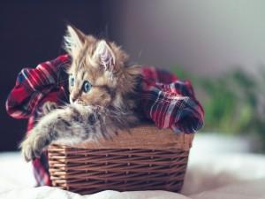 Postal: Gatito en su cesta