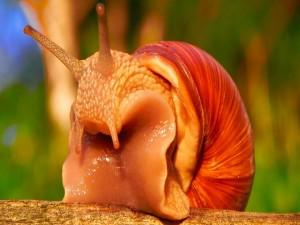 Un gran caracol