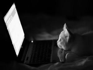 Gatito mirando atento la pantalla de un portátil