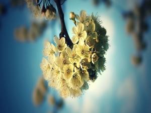 Postal: Flores agrupadas en una rama