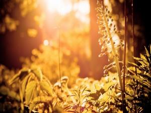 Postal: Plantas recibiendo el calor del sol