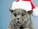 Un gato con gorro de Santa Claus