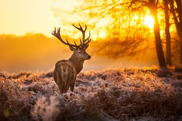 Ciervo en una tarde de invierno