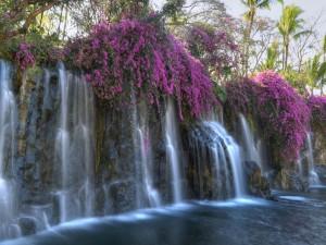 Cascada entre bellas flores