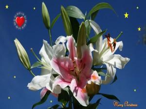 Flores y deseos de Navidad