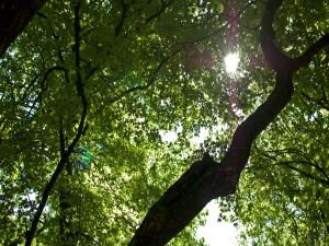 Postal: Sol a través de las copas de los árboles