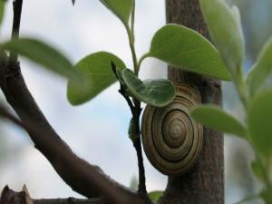 Caracol en un árbol