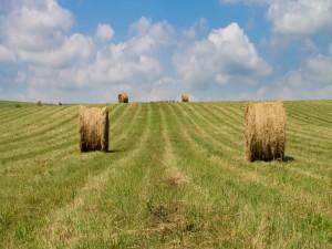 Rollos de pastura tras la cosecha