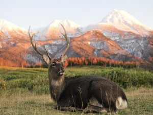 Postal: Hermoso ciervo descansando