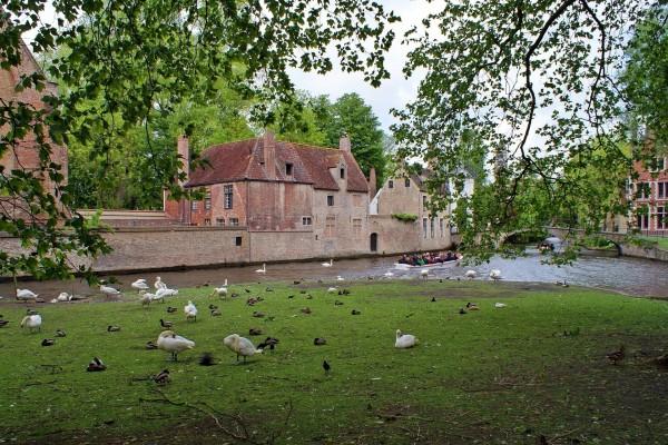 Cisnes y patos junto a un canal