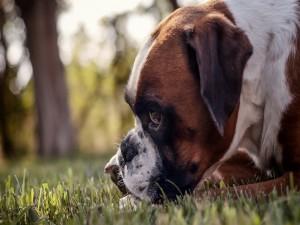 Postal: Un perro sobre la hierba