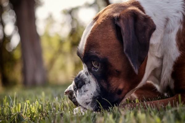 Un perro sobre la hierba