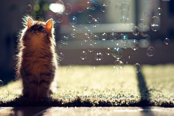 Gatito observando las pompas de jabón