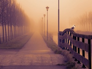 Gaviota posada en una barandilla de un bonito paseo