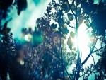 Ramas de árboles iluminadas por el sol