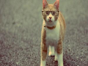 Un gato con gafas