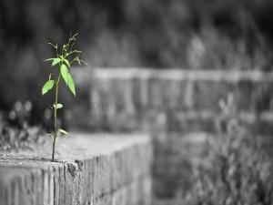 Postal: Planta verde creciendo sobre el cemento
