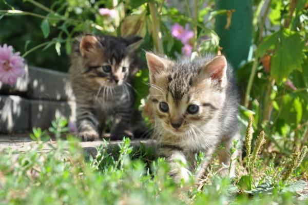 Gatitos en un jardín