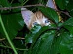 Gato escondido entre las plantas