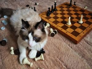 Un gato jugando con las fichas del ajedrez