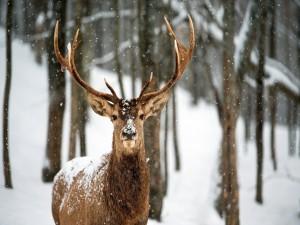 Un ciervo bajo la nieve