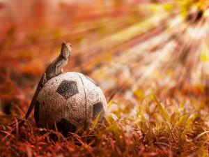 Postal: Lagarto sobre un balón de fútbol