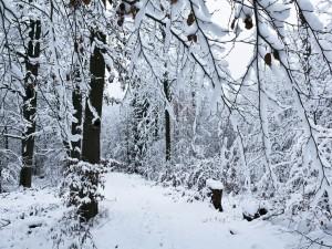 Blanca nieve cubriendo el bosque