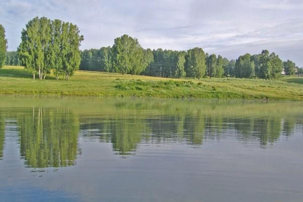 Verdes árboles a orillas de un río