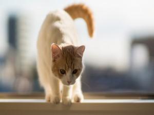 Postal: Un gato de pelo corto sobre una ventana