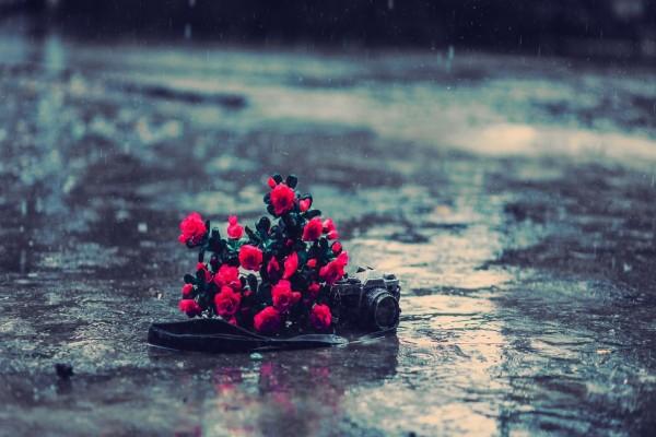 Cámara de fotos y flores bajo la lluvia