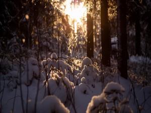 Nieve sobre las pequeñas ramas