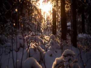 Postal: Nieve sobre las pequeñas ramas