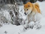 Un bonito perro corriendo en la nieve