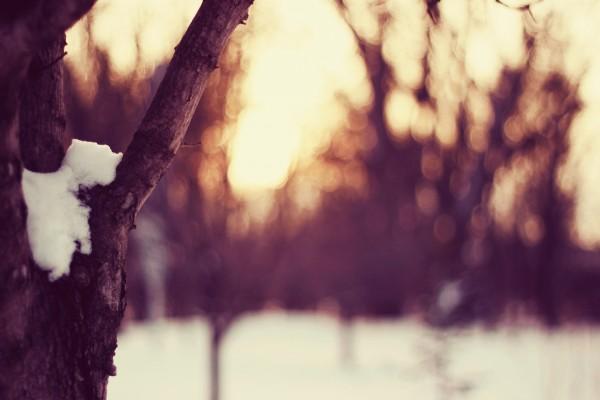 Nieve sobre el árbol